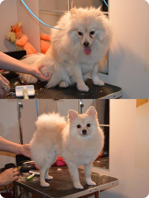 Před a po úpravě Špic