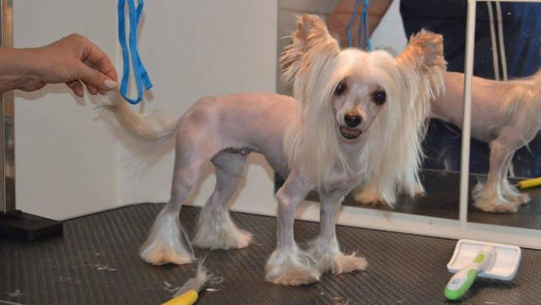 (Česky) Kreativní stříhání psů 4