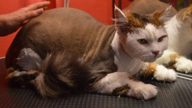 (Česky) Kreativní stříhání koček 1