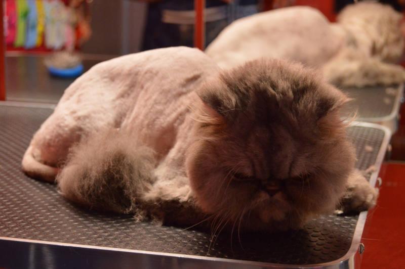 Kreativní stříhání koček 4