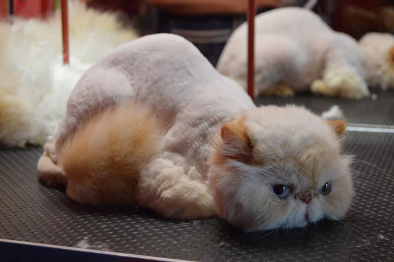 (Česky) Kreativní stříhání koček 2